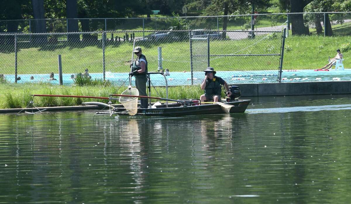 New York State Department of Environmental Conservation workers Katherine Sessions, left, and Scott Wells look for an alligator gar in the lake at Central Park on Wednesday, July 27, 2016 in Schenectady, N.Y. A fisherman had caught and released the large fish with sharp teeth. (Lori Van Buren / Times Union)