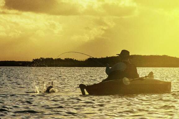 An angler battles a redfish that slammed a topwater plug fished over a shallow flat in Redfish Bay earlier this week. Because of their shallow draft, kayaks can allow anglers to fish areas inaccessible to most other vessels.