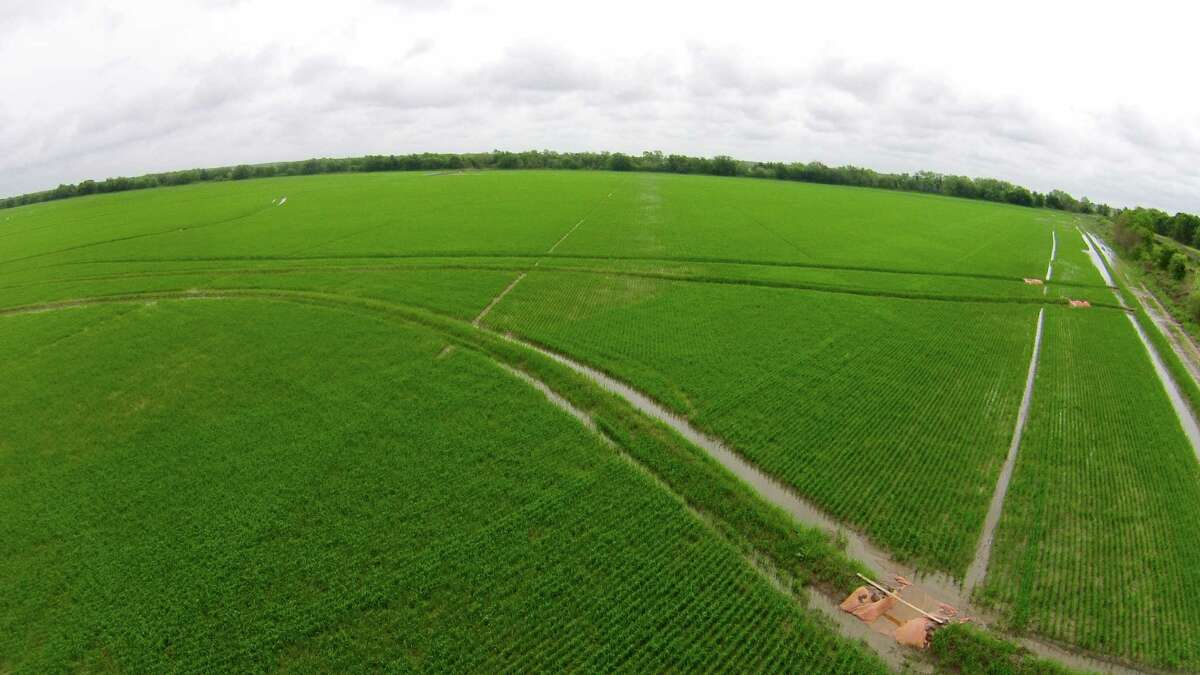 As a licensed pilot, Bay City rice farmer Scott Savage was able to experiment with agricultural drone use before the Federal Aviation Administration loosened restrictions.