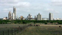 Cattle graze in a pasture near the Cemex plant in New Braunfels in 2009. Cemex agreed this week to a settlement with federal regulators over air-polluting emissions.