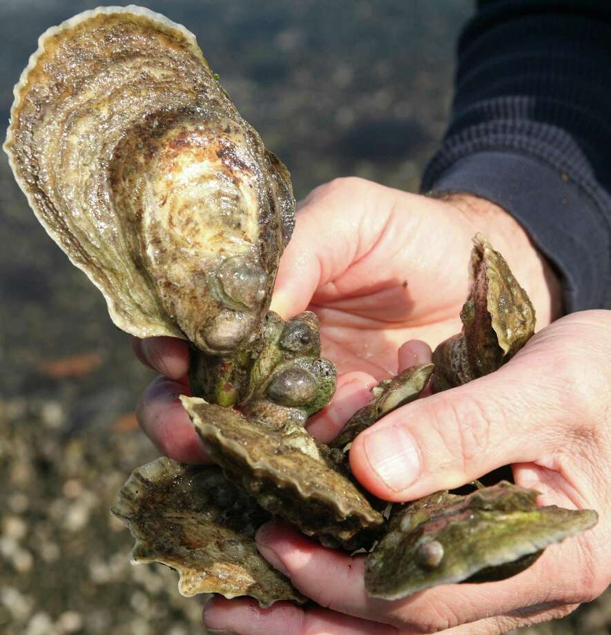 Oysters. Photo: David Ames / Greenwich Time / 00011118A