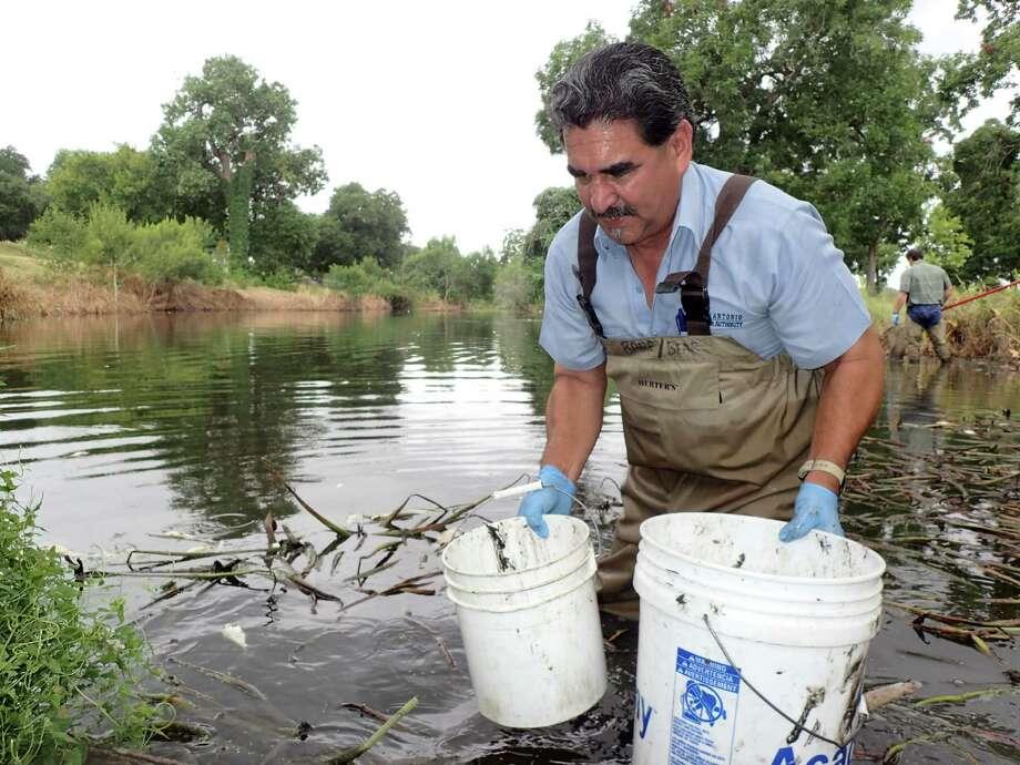 More than 12 000 fish die in the espada acequia san for Fishing near san antonio