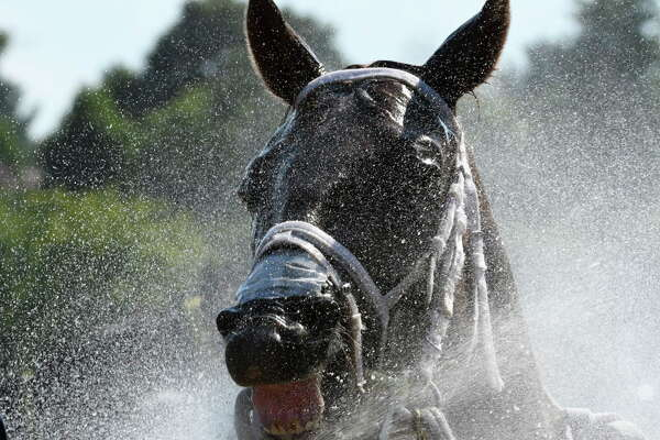 Grassady is all smiles after  the seventh race as he gets a cooling spray of water from the hose on the main track at the Saratoga Race Course Friday July 29, 2016 in Saratoga Springs, N.Y.  (Skip Dickstein/Times Union)