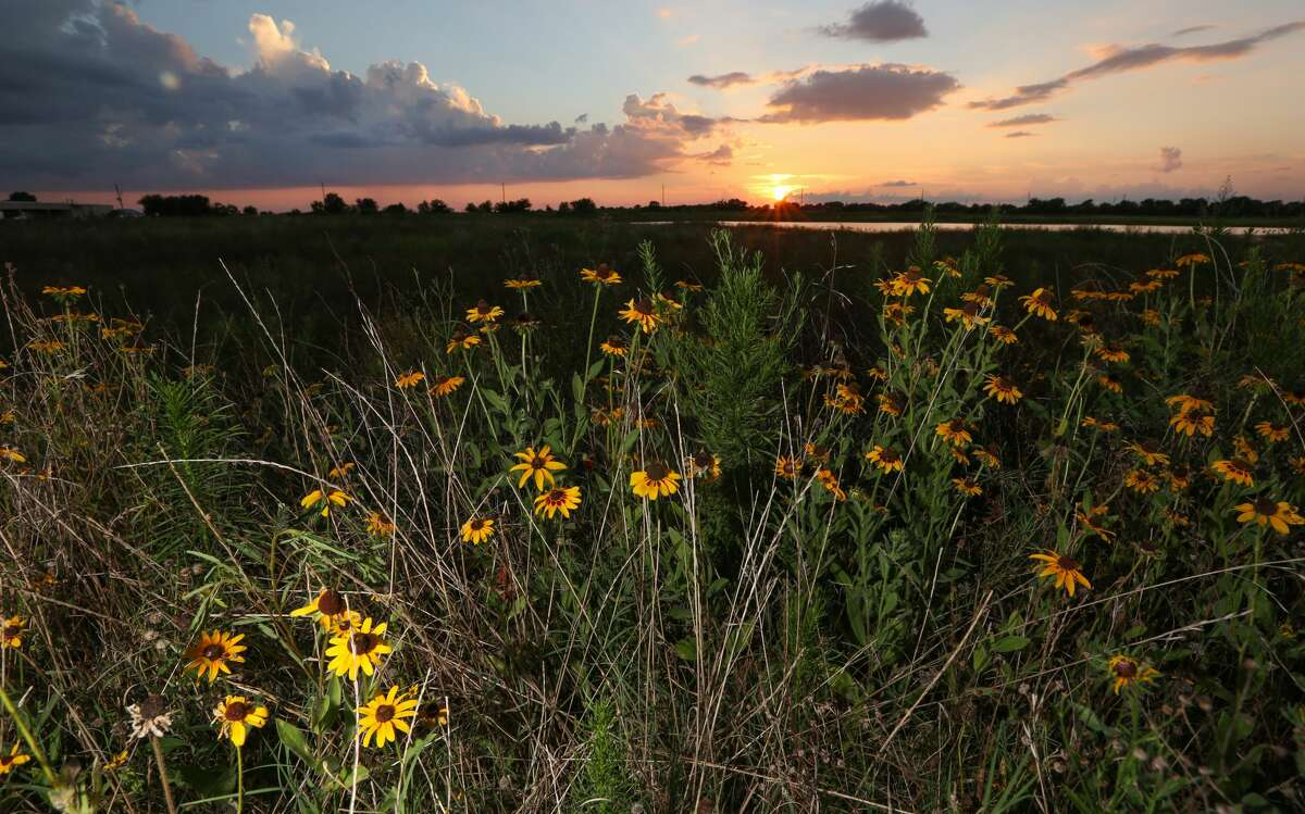 Preserving open land -- especially open land covered in native plants, such as the Katy Prairie -- reduces flooding. (For photos of rain gardens, neighborhood greenways and plants native to the Houston area, scroll through the gallery.)