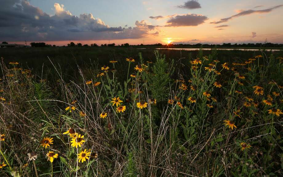 Preserving open land -- especially open land covered in native plants, such as the Katy Prairie -- reduces flooding. (For photos of rain gardens, neighborhood greenways and plants native to the Houston area, scroll through the gallery.) Photo: Steve Gonzales/Houston Chronicle