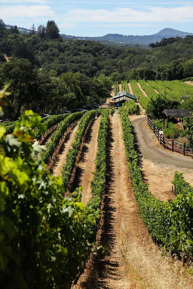 The vineyards of Benziger winery in Sonoma. Photo: Gabrielle Lurie, Special To The Chronicle