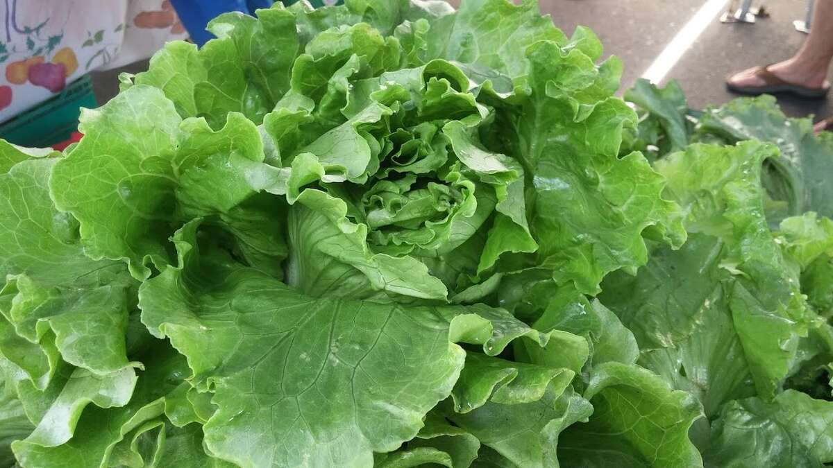 Head lettuce from Riverbank Farm.