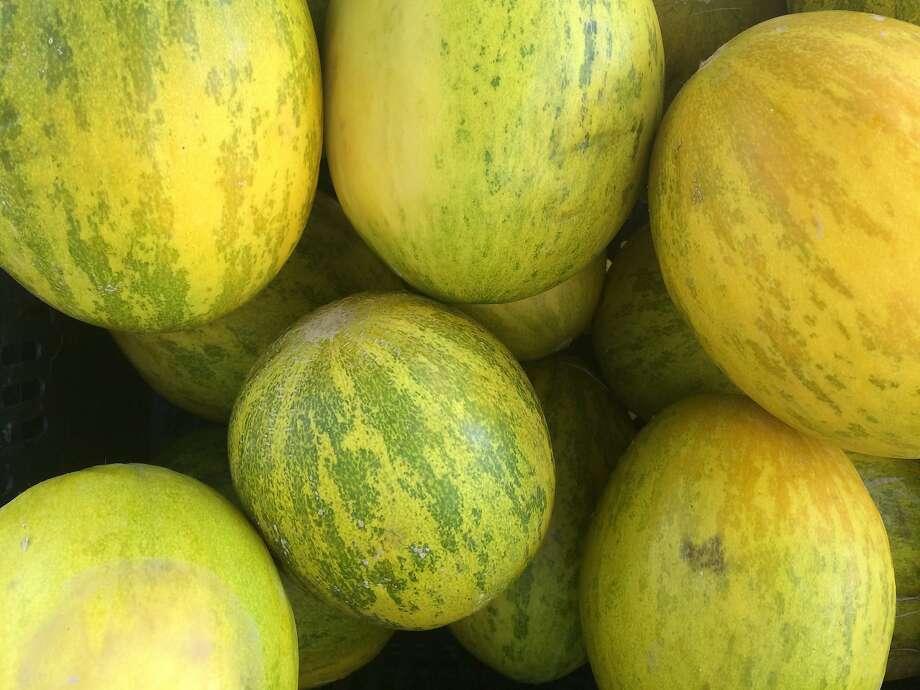 Piel de Sapo melons. Photo: Sarah Fritsche
