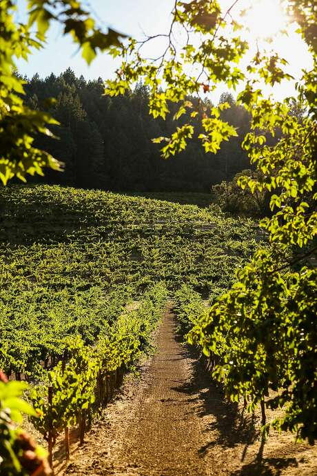 The vineyards can be seen at Stony Hill winery in Napa, California, on Friday, July 29, 2016. Photo: Gabrielle Lurie, Special To The Chronicle