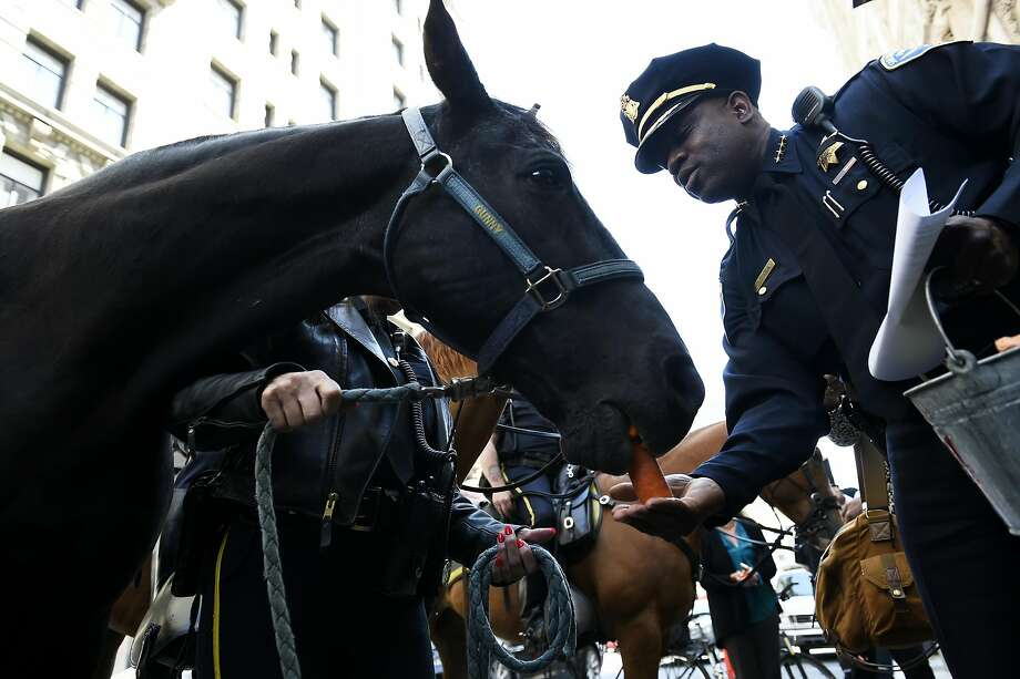 Gunny, a 19-year-old San Francisco Police Department Mounted Unit Tennessee walker, receives a carrot from Police Chief Toney Chaplin during his retirement ceremony. Photo: Michael Noble Jr., The Chronicle