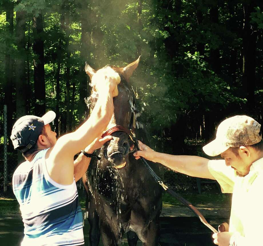 Preakness and Haskell winner Exaggerator gets washed after his Wednesday morning exercise. Julie Clark, the assistant trainer for the colt, said bath time is usually goof-around time for Exaggerator. Clark said he likes to snatch the sponge from the handlers, put it in his mouth, nod his head up and down and spray whoever is around with the sponge water. The Curly Howard of the backstretch. He didn't do that on Wednesday morning. Maybe he was on his best behavior because I was there. Sure. That's it. (Tim Wilkin / Times Union)