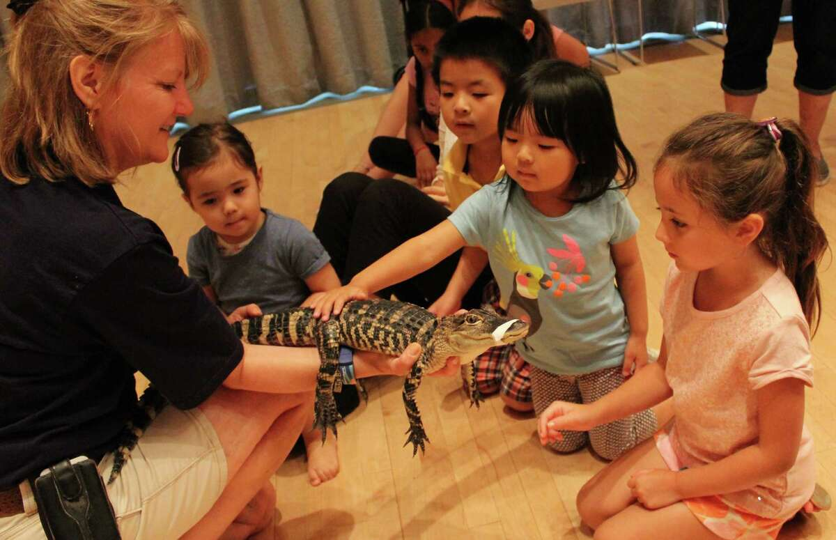 Beardsley Zoo educator Jackie Westlein holds on to a baby American alligator as children pet its back.
