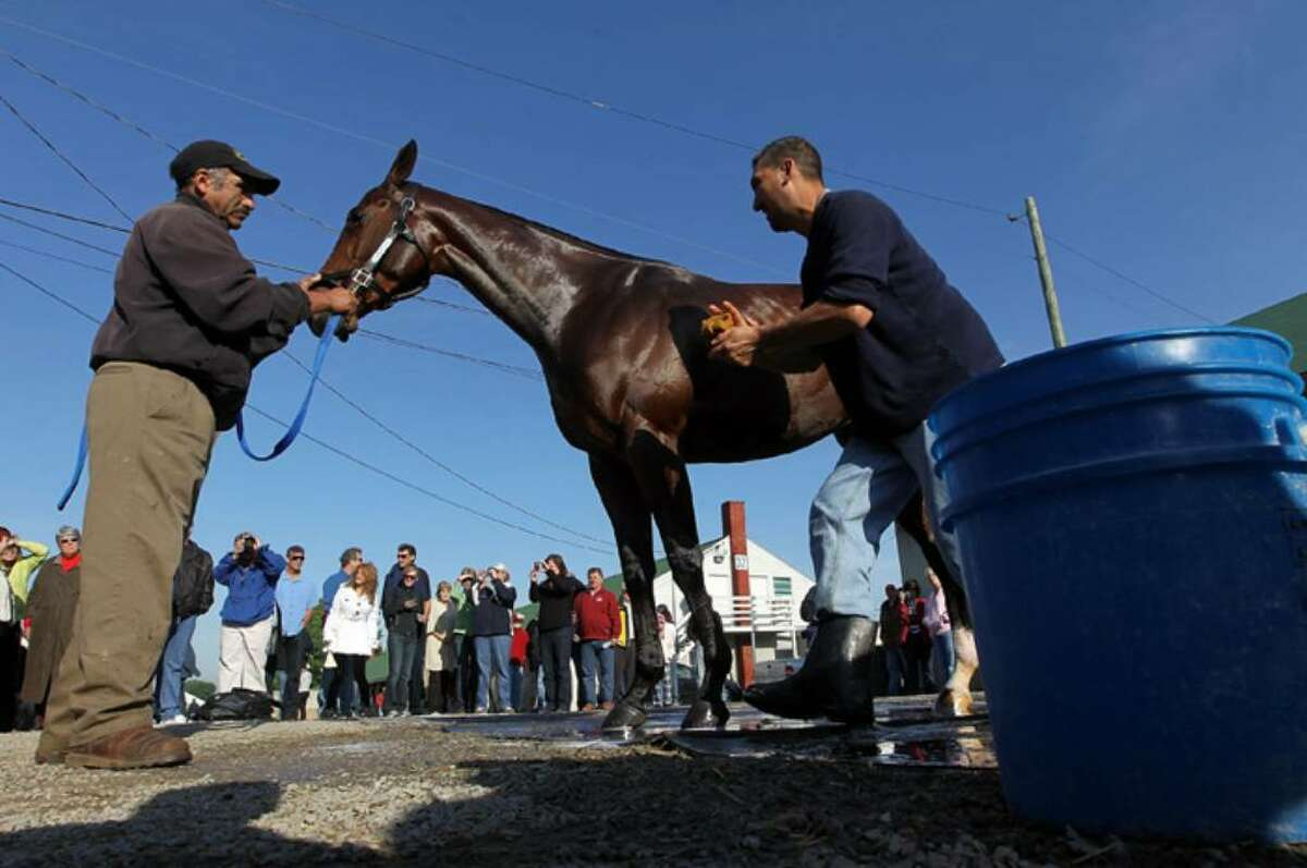 LOUISVILLE, KY - APRIL 29: Kentucky Derby entrant Lookin at Lucky is groomed in advance of the 136th running of the Kentucky Derby on April 29, 2010 at Churchill Downs in Louisville, Kentucky. (Photo by Jamie Squire/Getty Images)