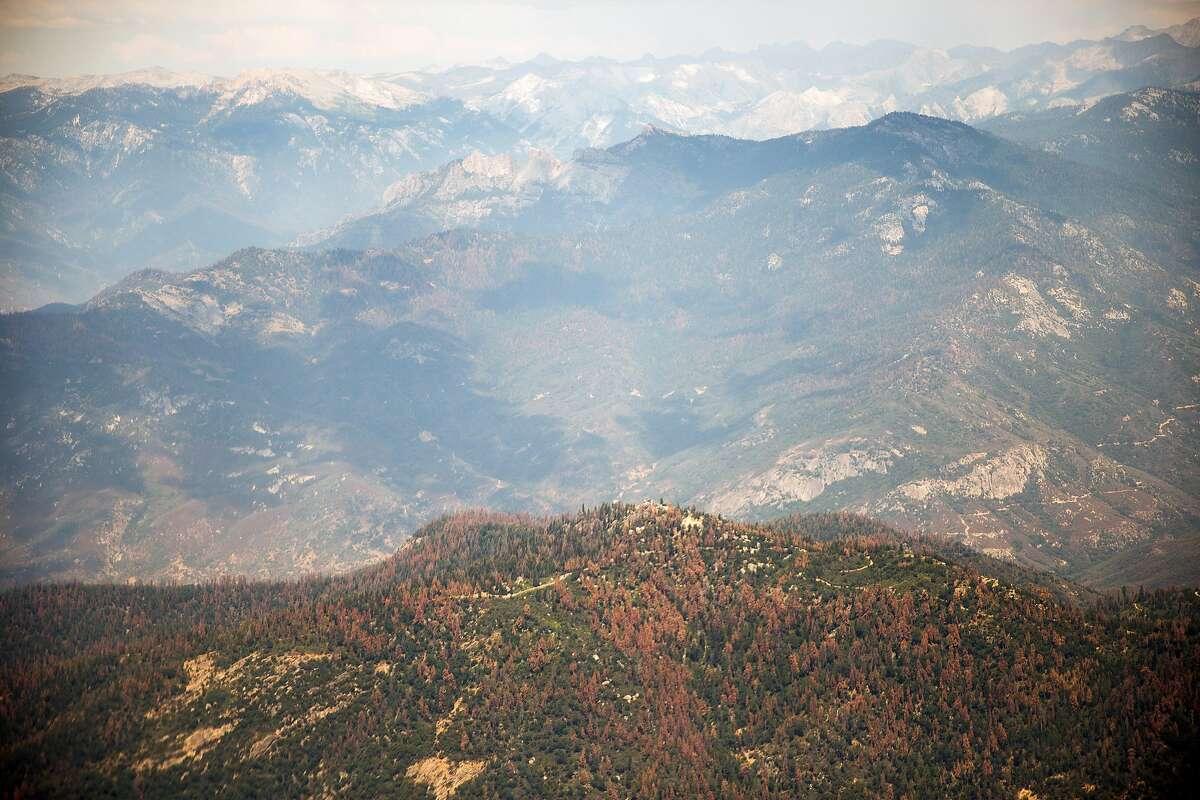 Dead trees dot the landscape of the southern Sierras, July 27, 2016.