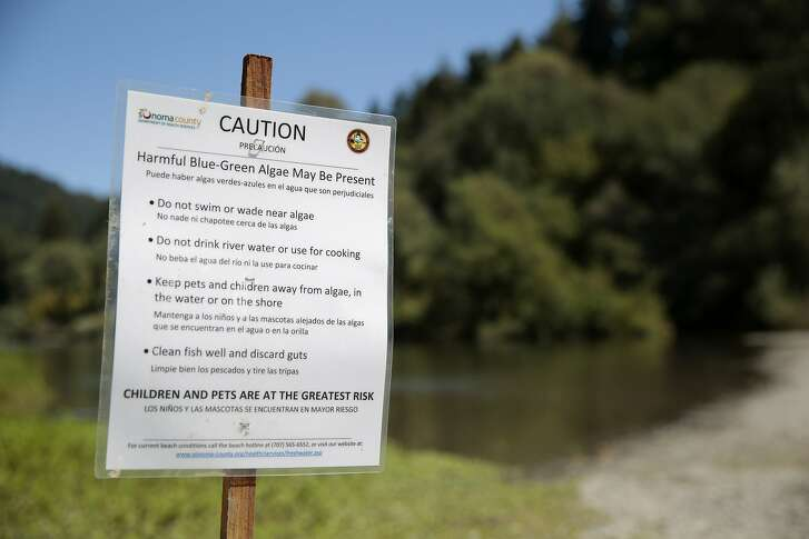A sign is posted at Sunset Beach Park in Forestville warning people of the harmful blue-green algae present in the Russian River, California, Friday, September 4, 2015. A potentially harmful blue-green algae has been detected in the Russian River. Authorities are considering closing beaches and advising people to stay out of the river over the holiday weekend. A dog that came in contact with the poisonous algae died on Thursday, and two other dogs suspected of suffering a similar fate earlier this summer. Ramin Rahimian/Special to The Chronicle