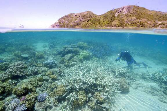 """This undated handout photo received on March 1, 2016, shows Lyle Vail, director of the Lizard Island Research Station, examining coral bleaching at Lizard Island off the Australian state of Queensland.  Scientists on March 1, 2016 warned coral bleaching was occurring on the Great Barrier Reef as sea temperatures warm, and it could rapidly accelerate unless cooler conditions blow in over the next few weeks.     AFP PHOTO / WWF AUSTRALIA    ----EDITORS NOTE ----RESTRICTED TO EDITORIAL USE MANDATORY CREDIT """" AFP PHOTO / WWF AUSTRALIA """" NO MARKETING NO ADVERTISING CAMPAIGNS - DISTRIBUTED AS A SERVICE TO CLIENTS - NO ARCHIVESWWF AUSTRALIA/AFP/Getty Images"""