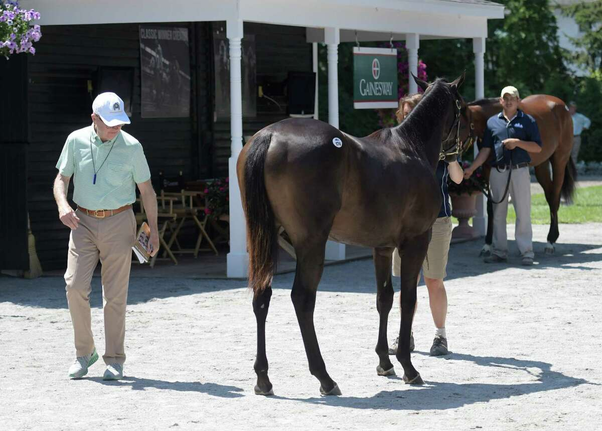 Former trainer and now horse agent Frank Brothers looks at a sales yearling at the Fasig Tipton sales yard Friday Aug. 5, 2016 in Saratoga Springs, N.Y. The yearling sales are back in town and will take place on Aug. 8th and 9th starting at 6:30 at the Finney Pavilion on the grounds of Fasig Tipton Sales Company. (Skip Dickstein/Times Union