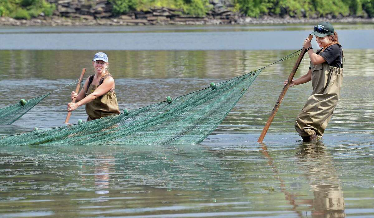 Rebecca Houser, left, DEC environmental science coordinator, and Hudson River Project volunteer Kacie Giuliano pull a 30-foot net checking out the fish, crabs and other river life during the fourth annual Great Hudson River Estuary Fish Count at Peebles Island State Park Saturday, August 15, 2015 in Cohoes, NY. (John Carl D'Annibale / Times Union)
