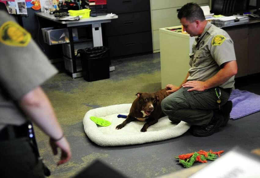 The Bridgeport Animal Control Center and Shelter 236 Evergreen Street, Bridgeport Contact info: 203-622-8399 animal.shelter@bridgeportct.gov