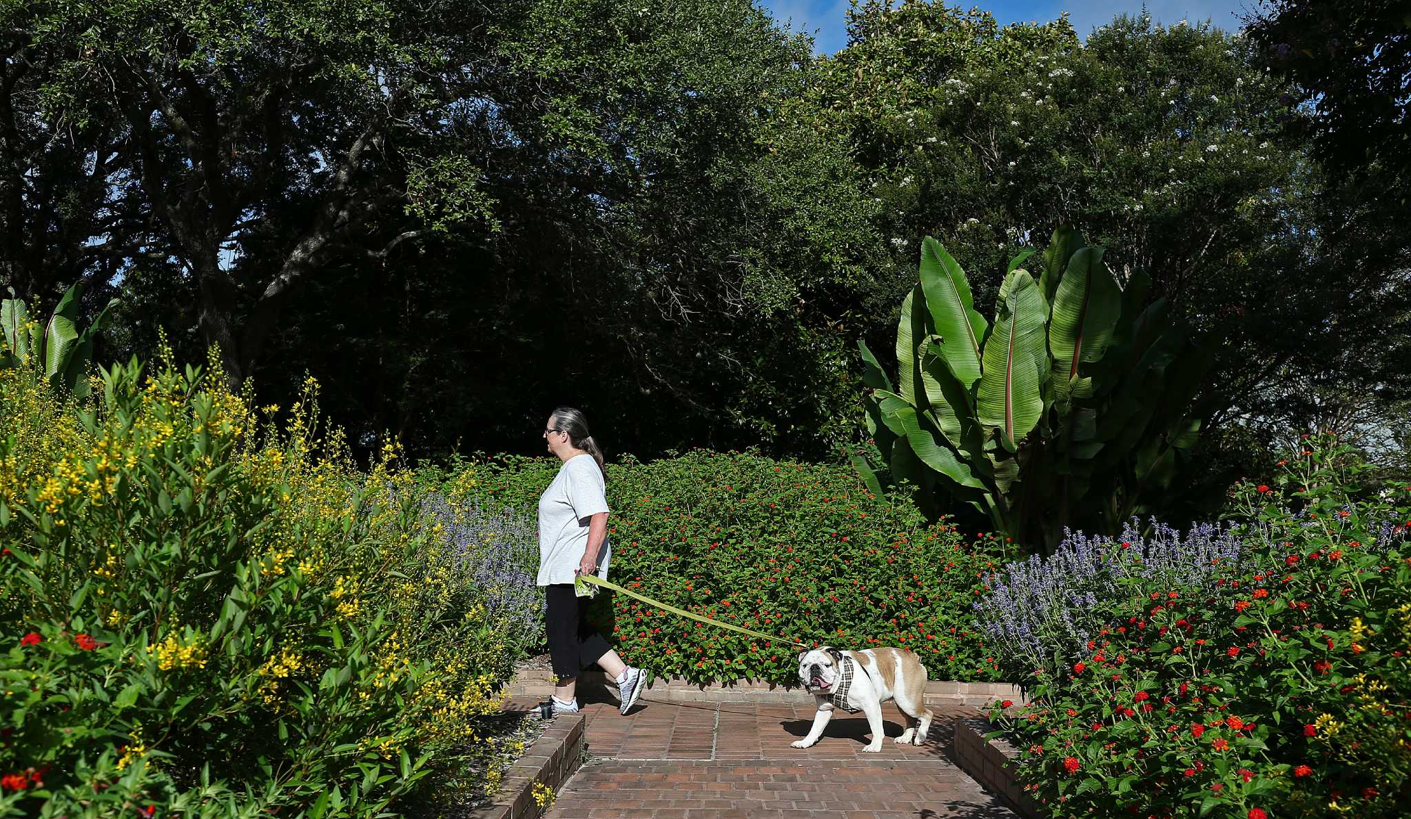 As Heat Rolls In Dogs Keep Cool At San Antonio Botanical