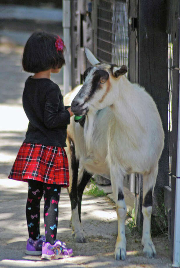 A child feeds a goat at the Saginaw Children's Zoo.