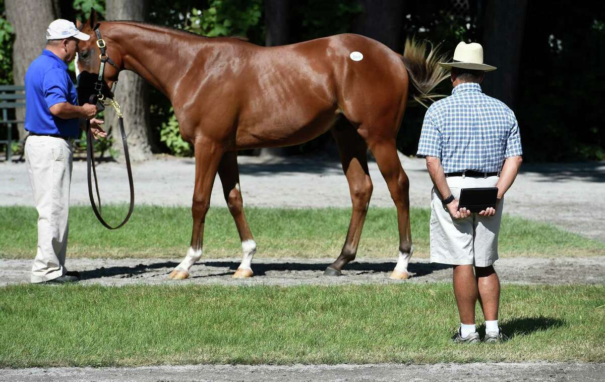 A prospective buyer checks out a yearling at the Denali Sales consignment at Fasig-Tipton in the hours before the sale this evening, Monday Aug. 8, 2016 in Saratoga Springs, N.Y. (Skip Dickstein/Times Union)
