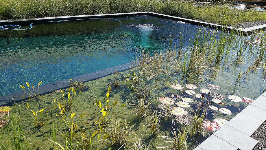 A pool designed by Natural Aquatics of Bethel that uses natural means to keep the pool clean. Photo: Contributed Photo / The News-Times Contributed