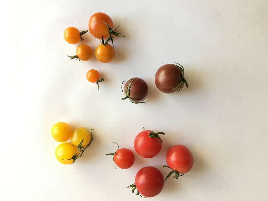 Assorted cherry tomatoes. Photo: Sarah Fritsche
