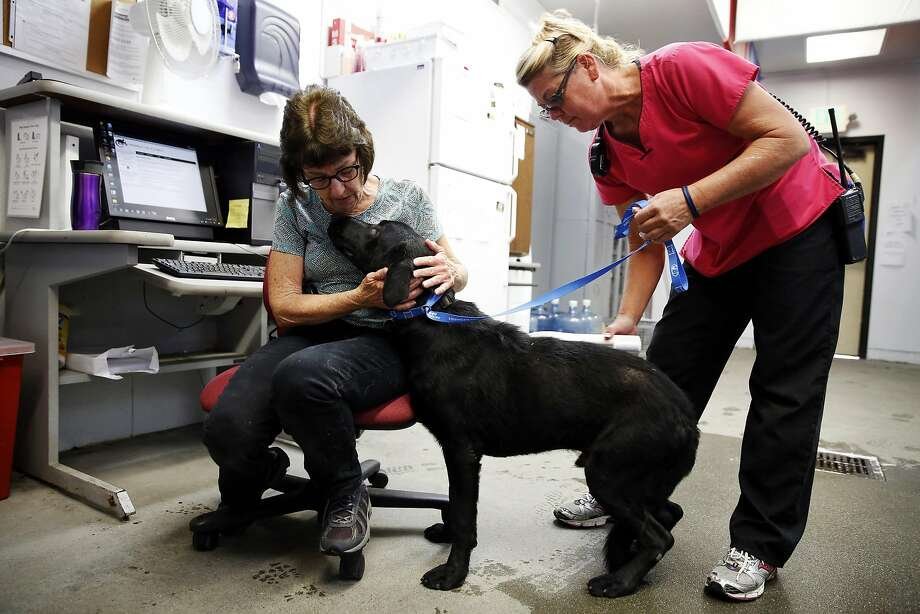 Cathy Brasier (left) and Aunie Winn check a male Labrador Retriever for a microchip tag during the receiving process at the Solano County Animal Care shelter in Fairfield, California, on Tuesday, August 9, 2016. Photo: Connor Radnovich, The Chronicle