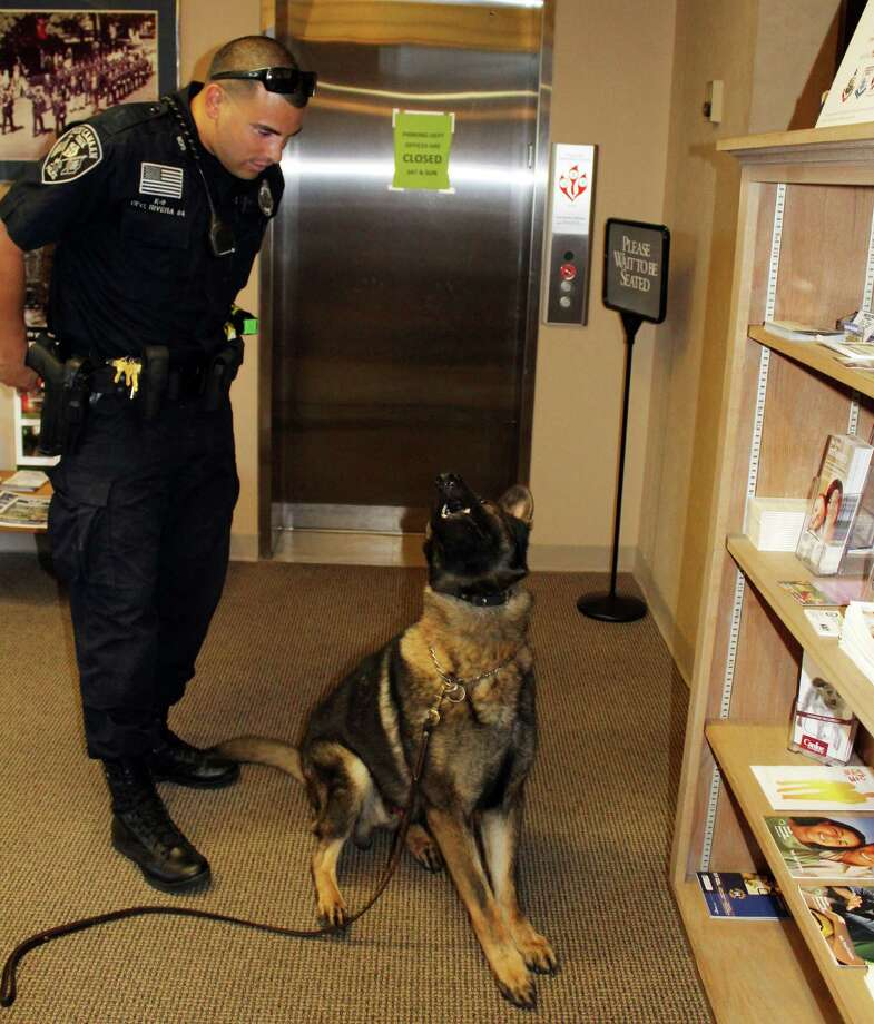 Officer David Rivera does a narcotics detection exercise with his canine, Apollo, at the New Canaan police station in New Canaan, CT, on Wednesday, July 27, 2016. Photo: Erin Kayata / Hearst Connecticut Media / New Canaan News