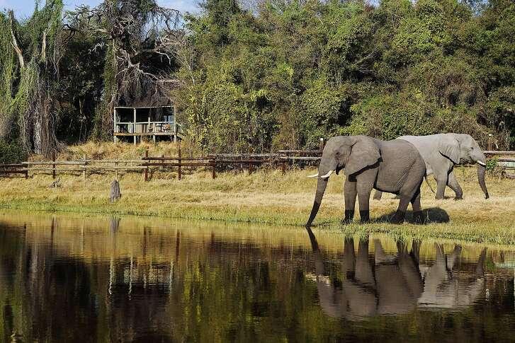 Drawn by the waters of the Okavango Delta, elephants congregate near Camp Okavango on Botswana's Nxaragha Island virtually year-round.