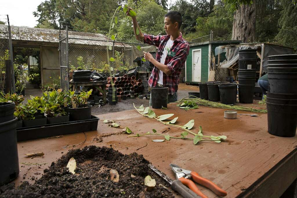 Tim Wong, A San Francisco Botanical Garden Butterfly Habitat Volunteer,  Works In The California