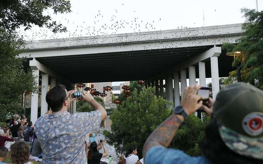 Camden Street Bridge Where: San Antonio Cost: Free - under I-35 bridge near Camden Street Source:Texas Parks and Wildlife