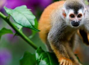 6Nt Costa Rica Flight and Hotel Escorted Pkg from $2,098 for 2