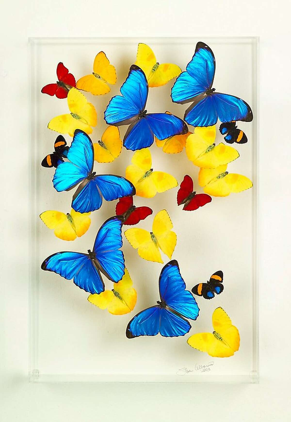 Steven Albaranes makes buttterflies enclosed in acrylic appear to be flying. He will be at the Burlingame art fair.