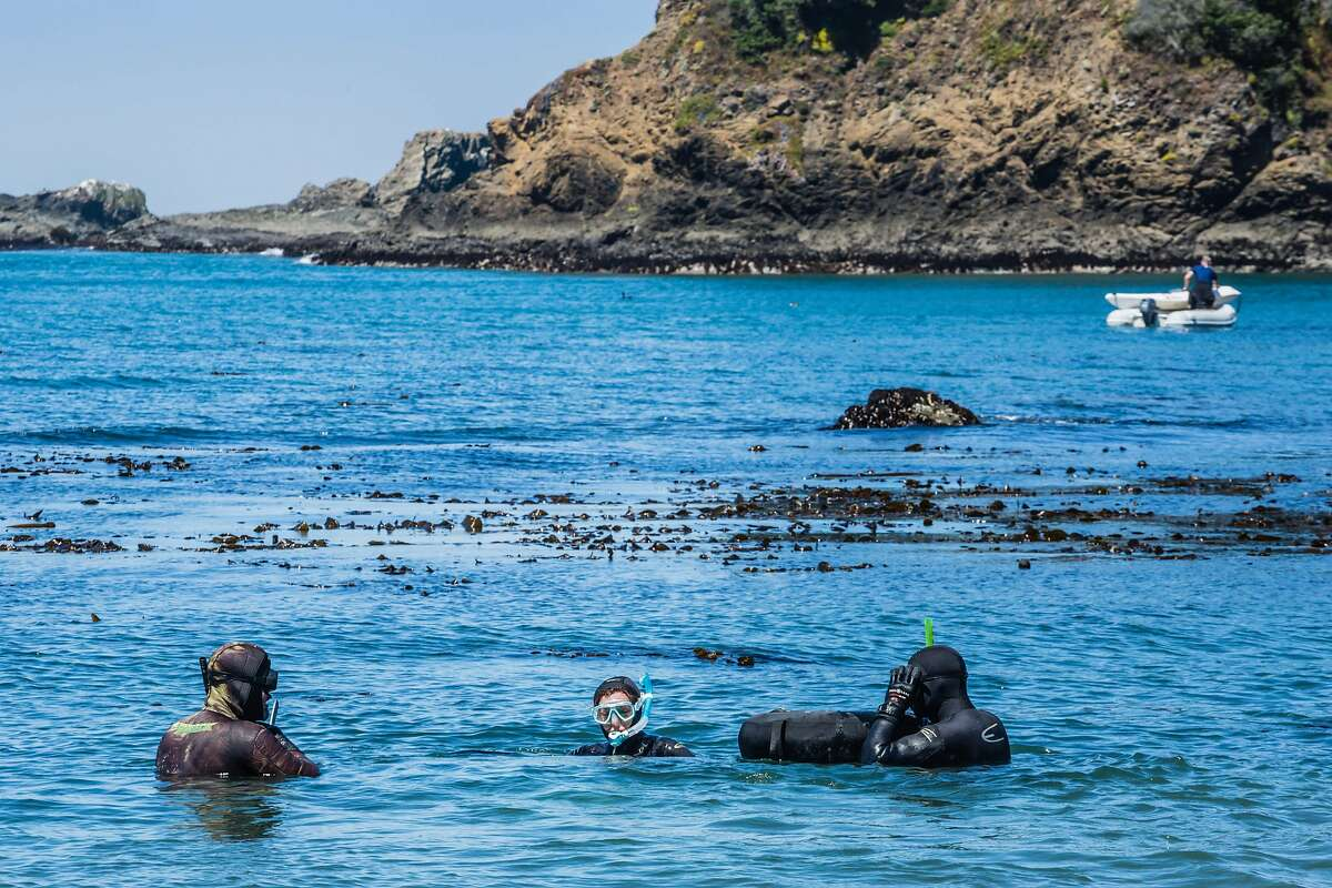 Divers return from abalone diving at the beach at Van Damme State Park in Little River, CA.