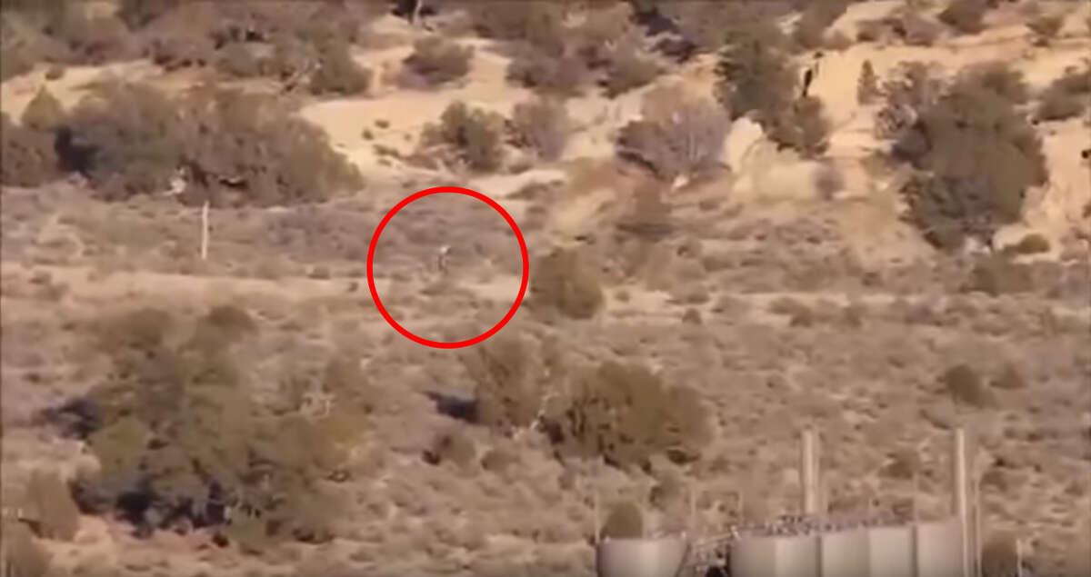 A new Aug. 16, 2016 video claims a chupacabra was wandering through a Portuguese desert.