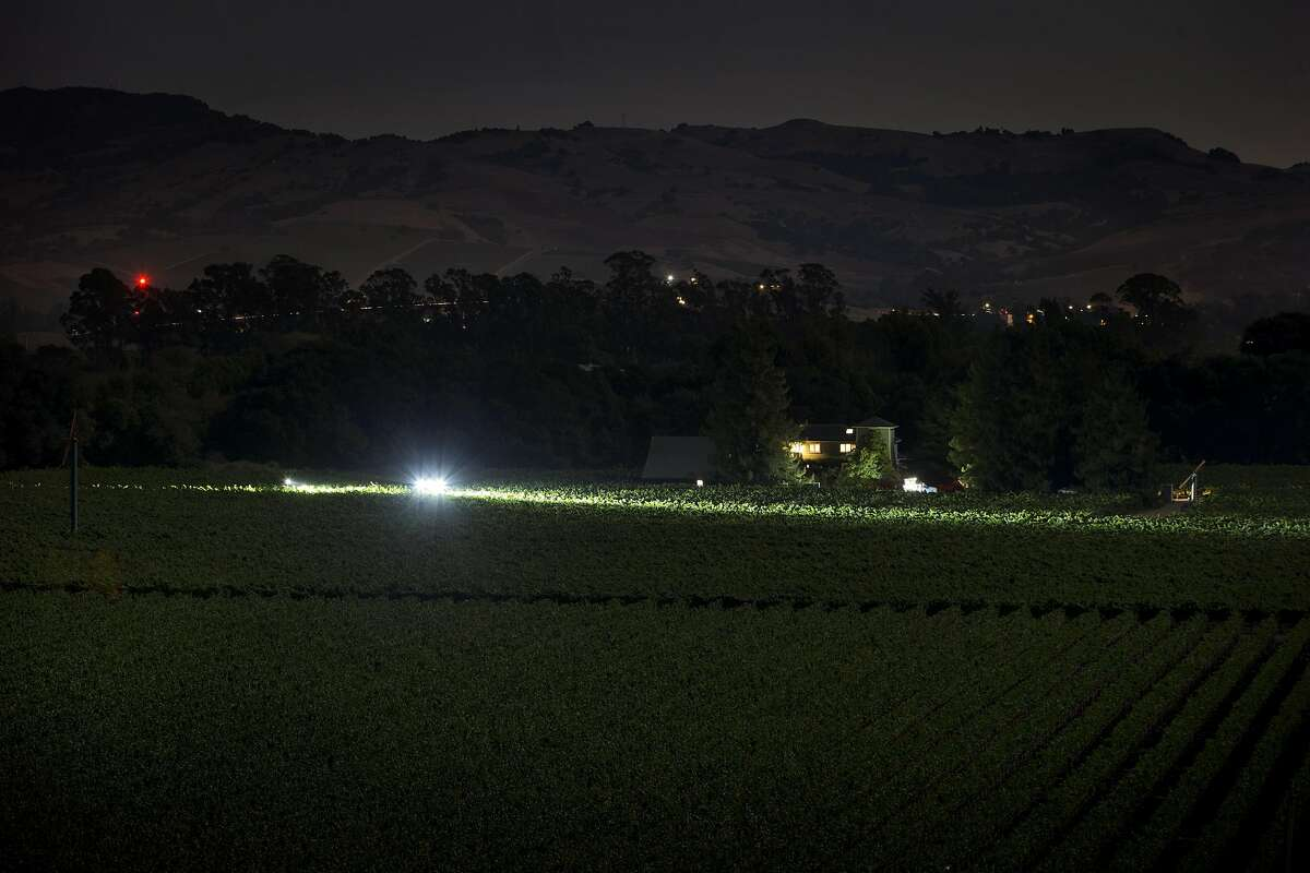LED lights on a tractor illuminate the vines for workers during the overnight 2016 wine grape harvest at Hyde Vineyards in Carneros in Napa, Calif., on Thursday, August 18, 2016. The Hyde's were harvesting the chardonnay grapes overnight to have them at the wineries at 7 a.m. The practice of overnight harvesting has grown over the past five years in the region.