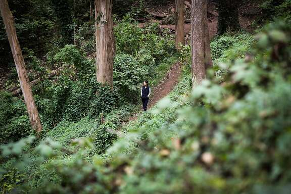 A woman walks through Mount Sutro Open Space Reserve behind the UCSF Campus in San Francisco, California, on Saturday, Aug. 20, 2016.