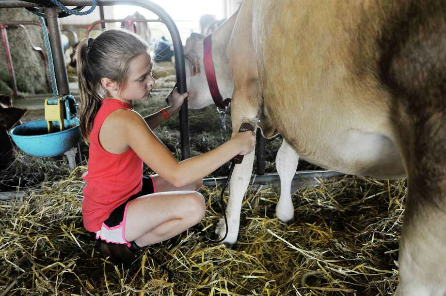 Gabriella Martineau, 9, of Florida trims the hair of her Jersey cow, Olemini during opening day at the Fonda Fair on Tuesday, Sept. 1, 2015, in Fonda, N.Y.  Martineau will show Olemini in the 4-H show on Wednesday morning.   (Paul Buckowski / Times Union) Photo: PAUL BUCKOWSKI / 00033165A
