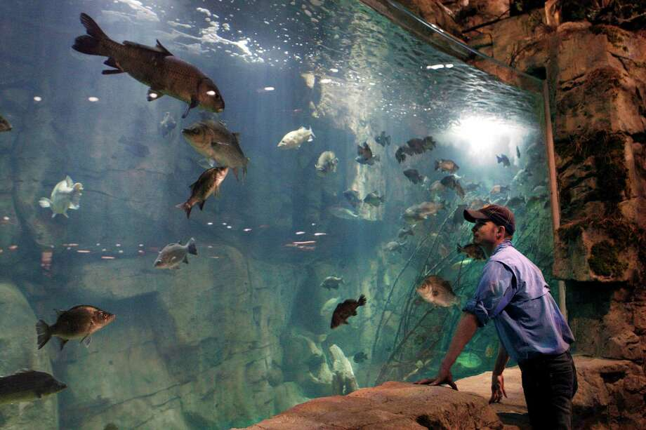Raulin Forst looks over an aquarium in the Bass Pro Shop store in Memphis, Tenn. Forst oversees the live exhibits in the store, which include 1,800 fish.Click through to see what the massive Memphis location looks like inside... Photo: Karen Pulfer Focht, FRE / FR171263 AP