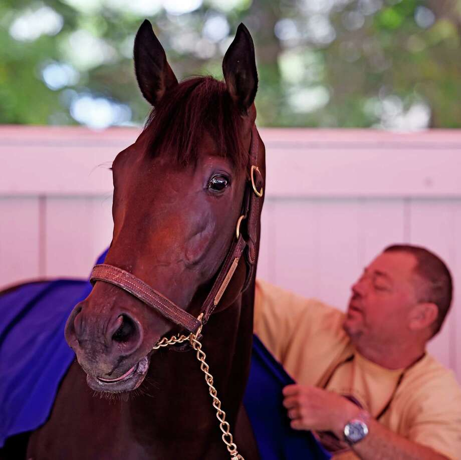 Trainer Eric Guillot puts a schooling rig on Laoban in the paddock of the Saratoga Race Course Monday August 21, 2016 in Saratoga Springs, N.Y.    (Skip Dickstein/Times Union) Photo: SKIP DICKSTEIN