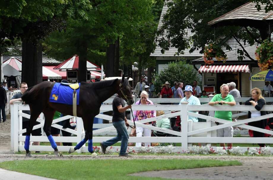 Laoban is schooled in the paddock of the Saratoga Race Course Monday August 21, 2016 in Saratoga Springs, N.Y.    (Skip Dickstein/Times Union) Photo: SKIP DICKSTEIN