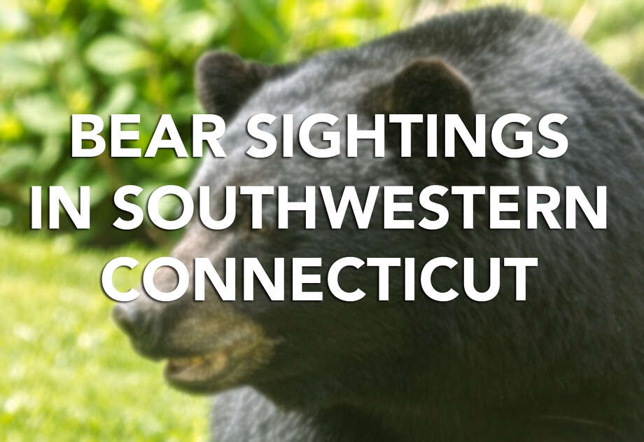 The state Department of Energy and Environmental Protection has released a list of bear sightings reported to the department from May 31, 2017 to May 21, 2018. Scroll through for a look at the number of bear sightings in southwestern Connecticut towns during this period.