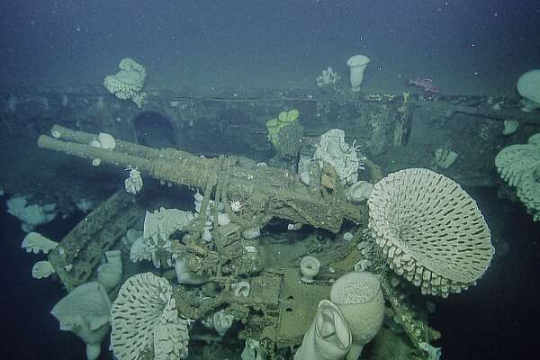 An antiaircraft gun surrounded by massive glass sponges on USS Independence in Greater Farallones National Marine Sanctuary