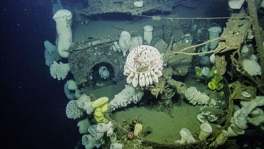 An antiaircraft deck gun covered by large glass sponge on the sunken aircraft carrier Independence. Photo: Handout Photo, National Oceanic And Atmospheric Administration