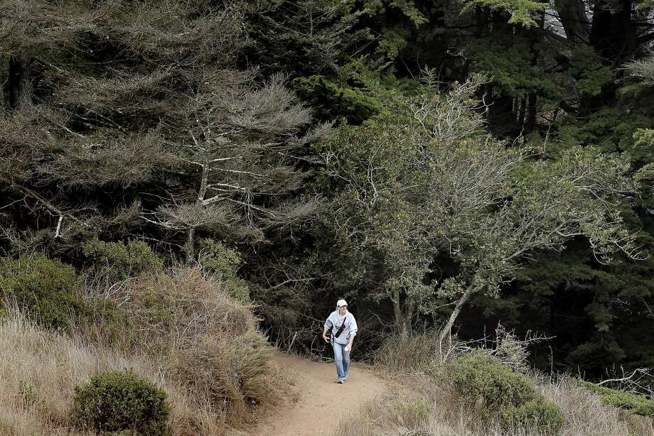 A visitor to the Golden Gate Recreation Area walks along a path at the Marin Headlands in Marin, Calif., on Tuesday, August 23, 2016. Photo: Carlos Avila Gonzalez, The Chronicle