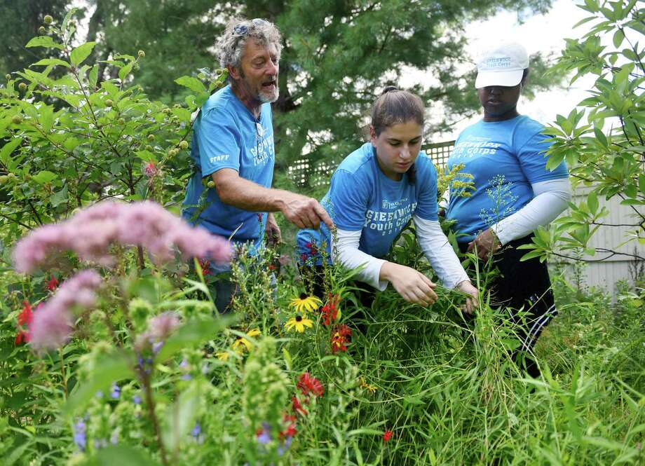 Conservation supervisor Dean Fausel, Claudia Bonaparte, center, 17, and Yaa-Yaa Tai-Sen-Choy, 16, pull weeds from the garden at the Greenwich Land Trust in Greenwich, Conn. Wednesday, Aug. 17, 2016. The Land Trust hired a group of GHS teenagers to plant and harvest produce this summer with harvested food donated to the Neighbor to Neighbor food pantry. Photo: Tyler Sizemore / Hearst Connecticut Media / Greenwich Time
