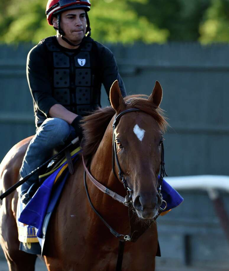 Belmont entrant Governor Malibu goes to the main track at the Belmont Race Course for his morning exercise Thursday morning June 9, 2016 just two days before the 148th running of The Belmont Stakes to be run Saturday in Elmont, N.Y. (Skip Dickstein/Times Union) Photo: SKIP DICKSTEIN