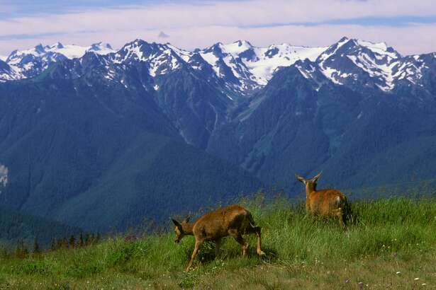 Two black-tailed deer at Hurricane Ridge on the Olympic Peninsula in the Olympic National Park. (Photo by Wolfgang Kaehler/LightRocket via Getty Images)